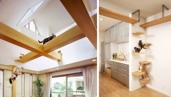 unbelievable cat friendly house design from japan