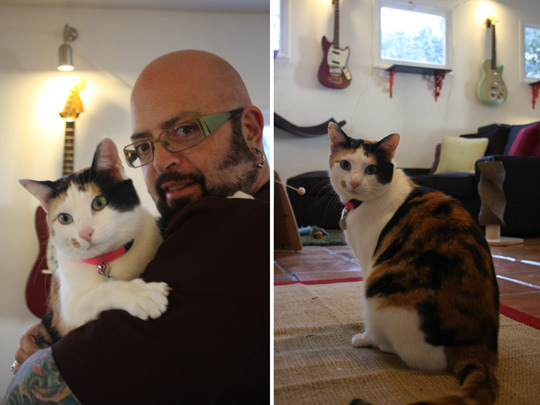 Jackson Galaxy Cat Behaviorist