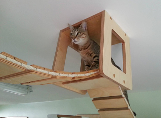 Amazing german designed cat climbing furniture hauspanther for Cool cat perches