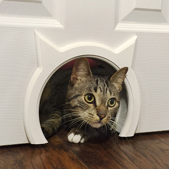 Kitty pass interior cat door hauspanther ive seen lots of diy ideas for cutting access holes for cats through interior doors but finishing the edges of the cutout is always the biggest challenge planetlyrics Image collections